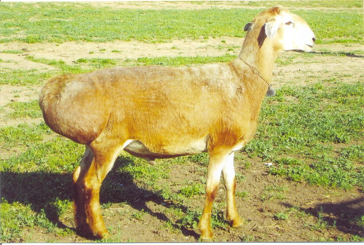 """Журнал """"Livestock science"""" опубликовал статью ученых КазНИИЖиК."""