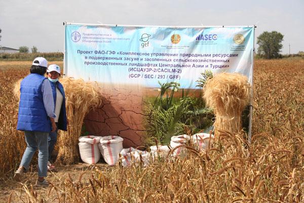 Засуха обнажила слабые места казахстанского животноводства